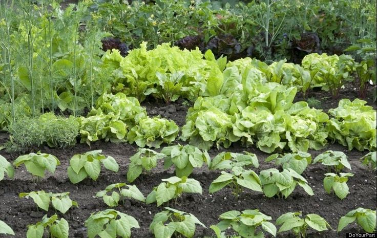 Gardening In A Drought: Tips For Watering Your Garden In The Hot, Dry Weather: Dry Weather Repin, Hot Weather Plants, Hot Weather Gardens, Water Gardens, Water Your Gardens, Gardens Survival, Plants For Hot Weather, Flowers Beds, Gardens In Hot Weather
