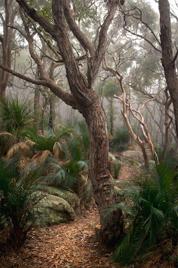 Bullimah Point, Killcare Heights, Central Coast, NSW, Australia