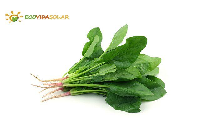 Espinaca (Spinacea oleracea) - Propiedades de la Espinaca