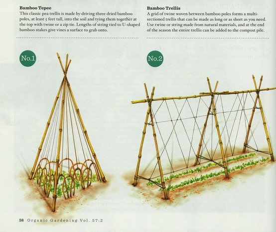 Pea Trellis I id the long one in the green house. Would have been better right at the back rather than alon the side. Or do two tent shaped ones where you can access all sides.  Make it 2m tall.