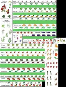 Plan potager exemple