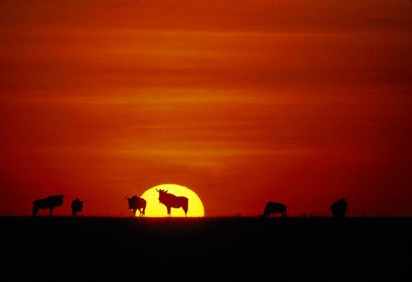 Tanzania Tourism - Wildlife