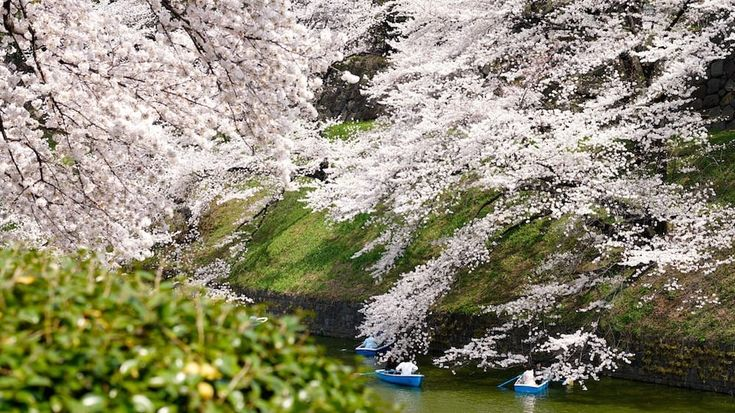 Spring In Japan: Traveling, Clothing And Weather In March-May   MATCHA - JAPAN TRAVEL WEB MAGAZINE