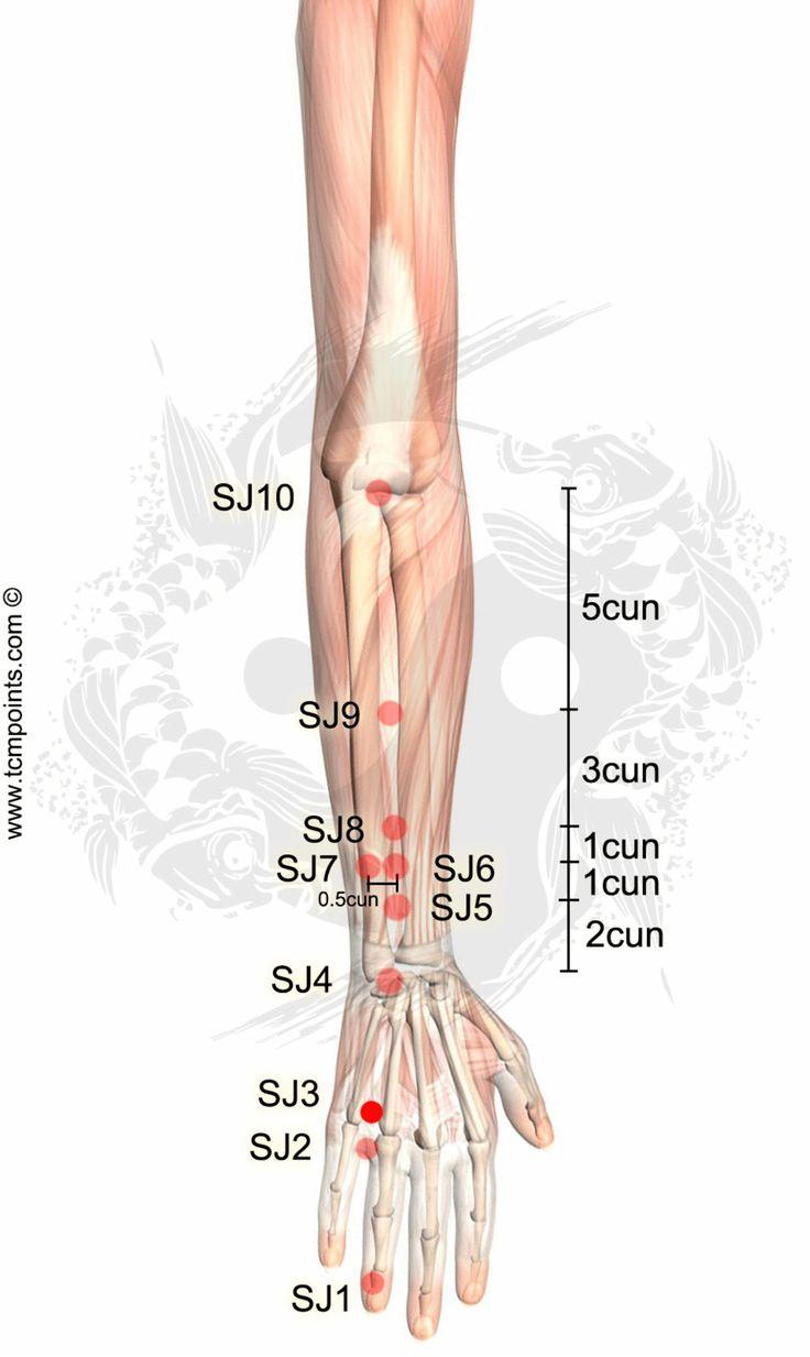 http://tcmpoints.com/de/dreifacher-brenner-san-jiao/sj3-zhongzhu/ Punkt Lokalisation: Mit der geballten Faust auf der Rückseite der Hand zwischen dem 4. und 5. Mittelhandknochen in einer Vertiefung proximal zum 4. Daumengrundgelenk. TCMAktionen: Klärt Hitze im Kopf. Reguliert das Shao Yang (kleineres Yang) [SJ + Gb]. Entfernt Obstruktionen aus dem Kanal. Ist wohltuend für die Ohren. Kontrolliert das Yang der Leber. Indikationen: Schmerzen …