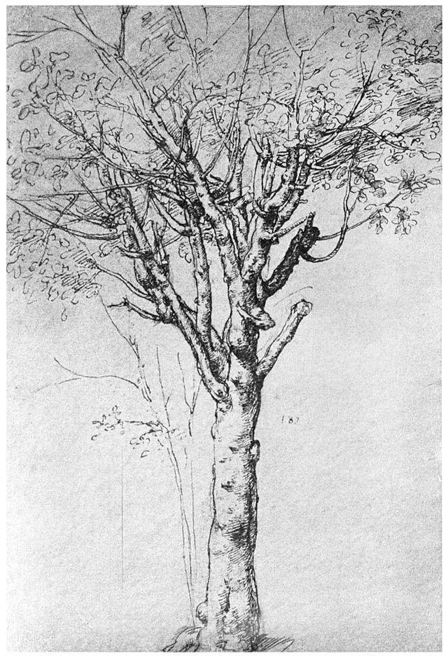 Leonardo da Vinci - Un albero