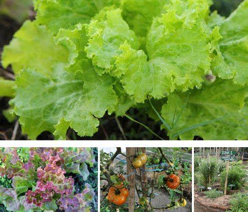Baliwood Organic Farm - ubudorganicmarket