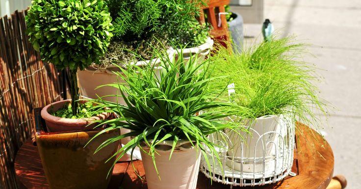 Decore o interior da sua casa com plantas . Na sala, no quarto, no escritório. Não importa onde, cultivar plantas dentro de casa é uma oportunidade de tornar o ambiente mais positivo e cheio de energias. Para isso, o segredo é saber escolher as plantas que melhor se adaptem às condições do local. Conhecer as características de cada uma é essencial ...