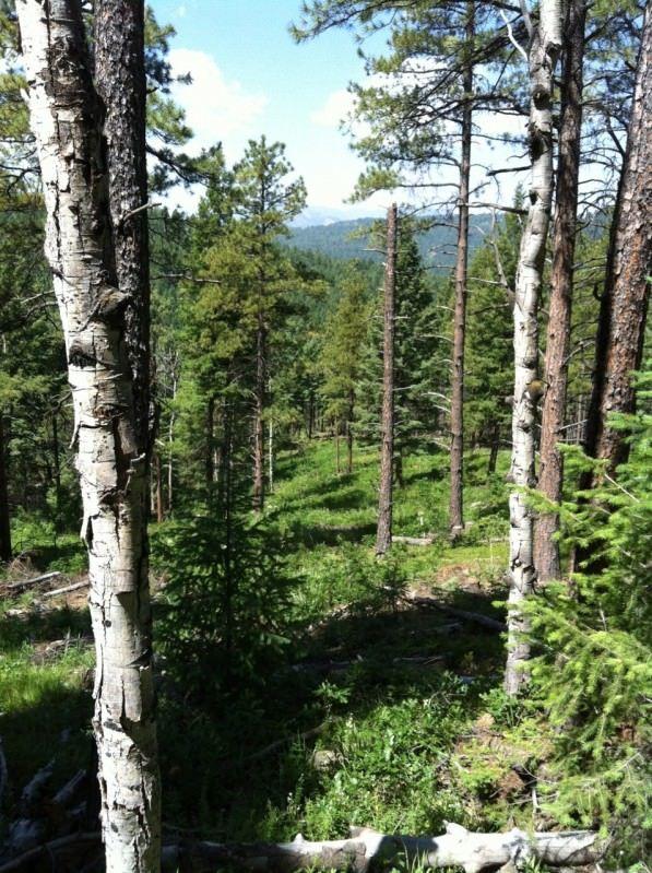 Indian Creek Trail trees
