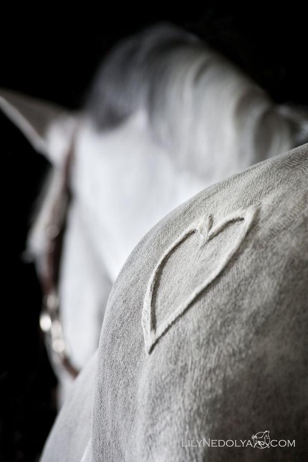 #pferd #herz