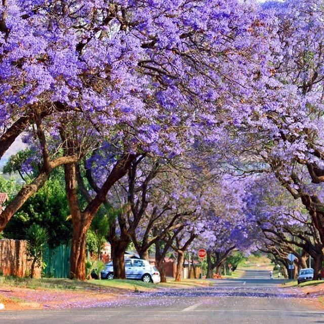 Ruas de Pretória - África do Sul🌸#hyturismo #trip #travel #viagem #turismo #pretoria #africadosul #southafrican