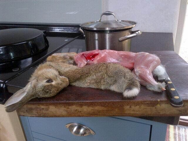 """Jeannette Winterson: """"Rabbit ate my parsley. I am eating rabbit."""" Love it. I have a rabbit problem,too."""