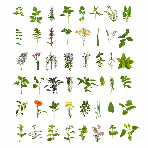 Herb and Flower Collection -             Fototapeter & Tapeter -           Photowall