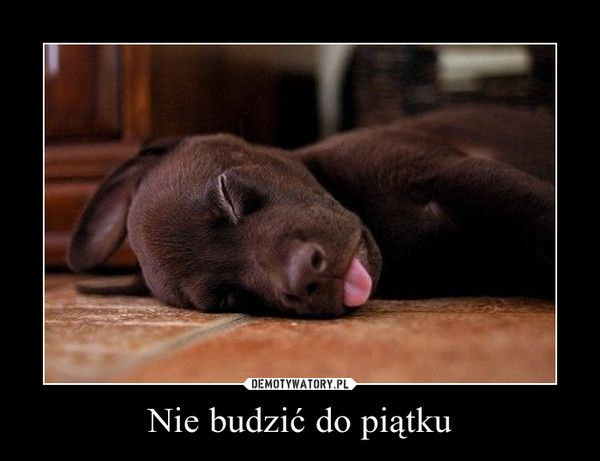 Nie budzić do piątku –