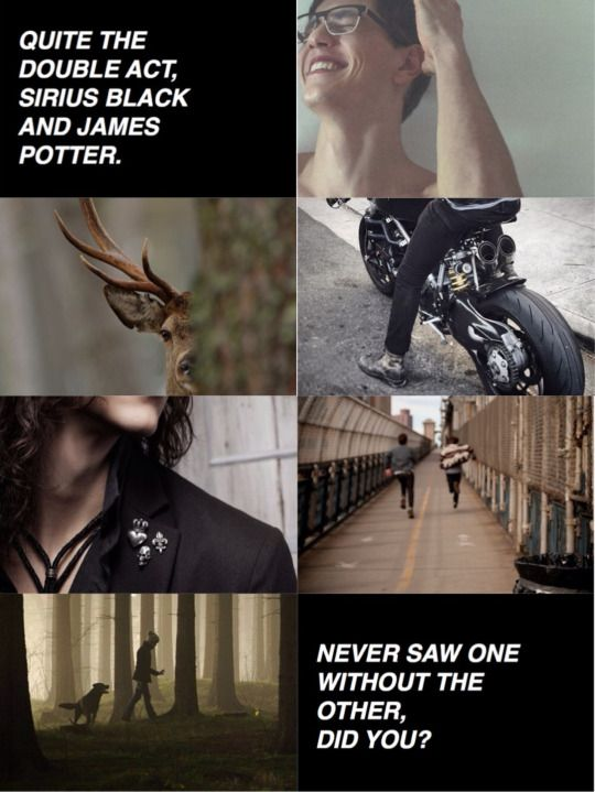 Padfoot and Prongs aesthetic