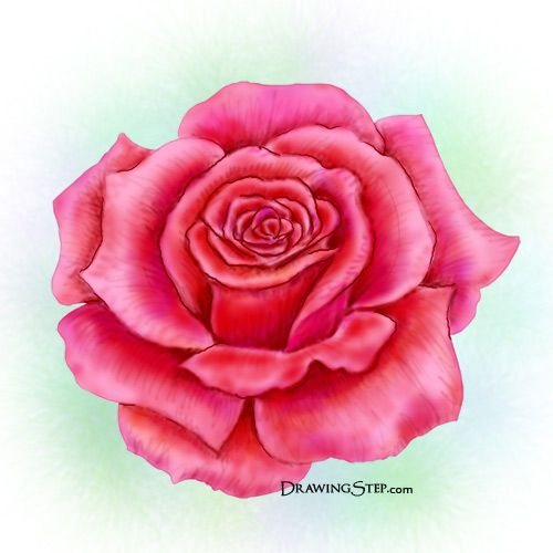 How to Draw a Rose Step by Step it actually works if u do it right