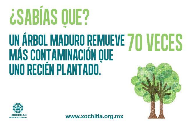 Sabías que un árbol maduro remueve 70 veces más contaminación que uno recién plantado.