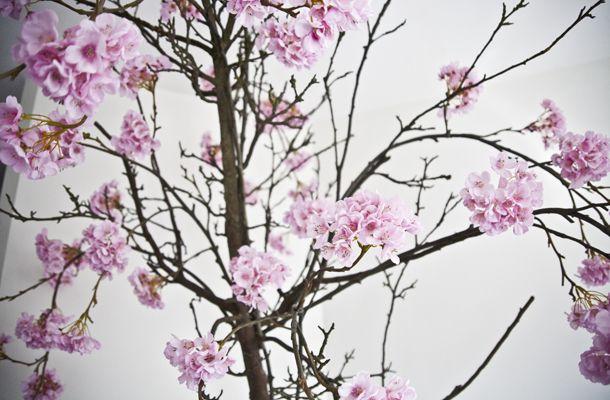 My Japanse blossom tree