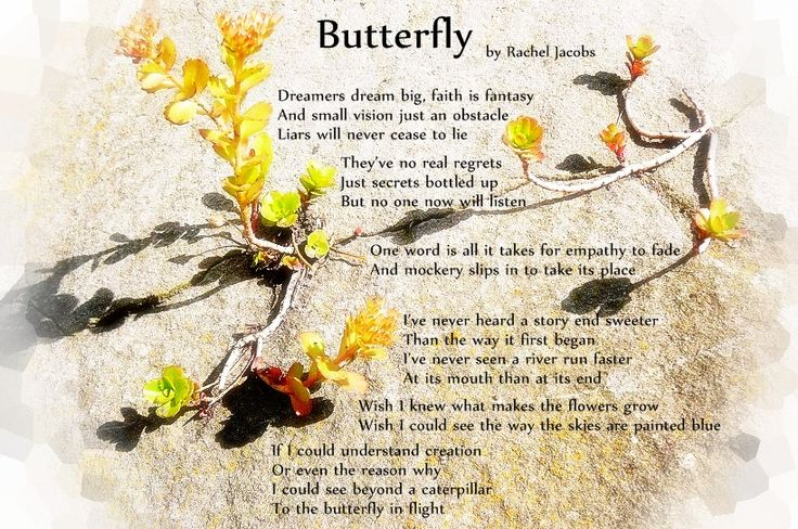 Butterfly, original poem by Rachel Jacobs.  Photo by Rachel Jacobs