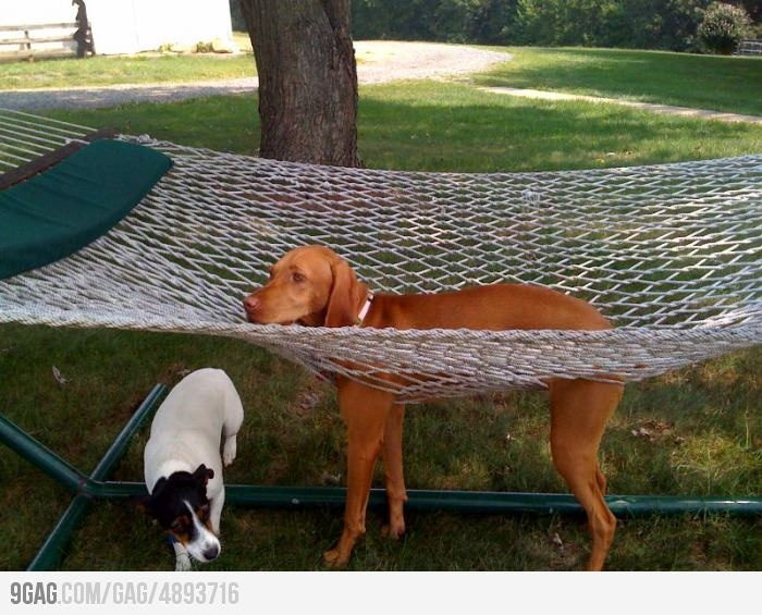 I don't understand why humans love this kind of bed...haha