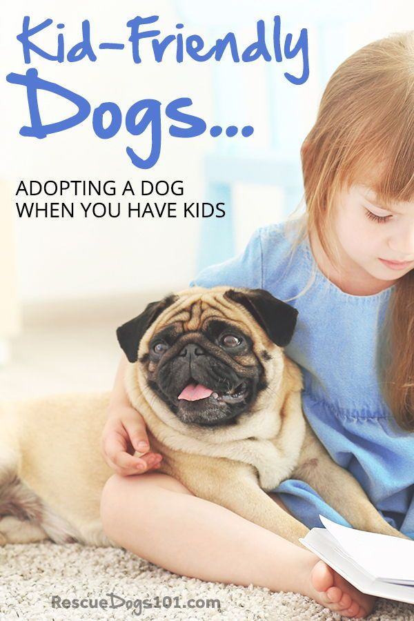 Adopting A Dog When You Have Kids Child Friendly Dogs Dog