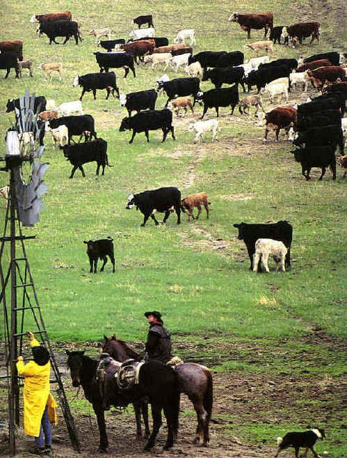 Livestock Ranching | Cattle ranchers in the Sandhills in Thomas County