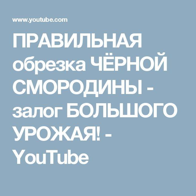 ПРАВИЛЬНАЯ обрезка ЧЁРНОЙ СМОРОДИНЫ - залог БОЛЬШОГО УРОЖАЯ! - YouTube