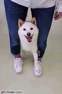 Taking the dog for a walk | Gif Finder – Find and Share funny animated gifs