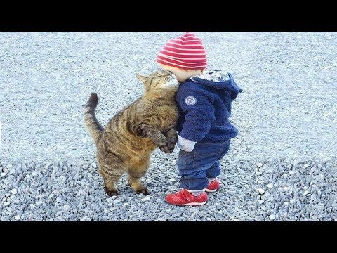Babies and Cat are Best Friend | Babies and Cats Playing Together #2 - YouTube