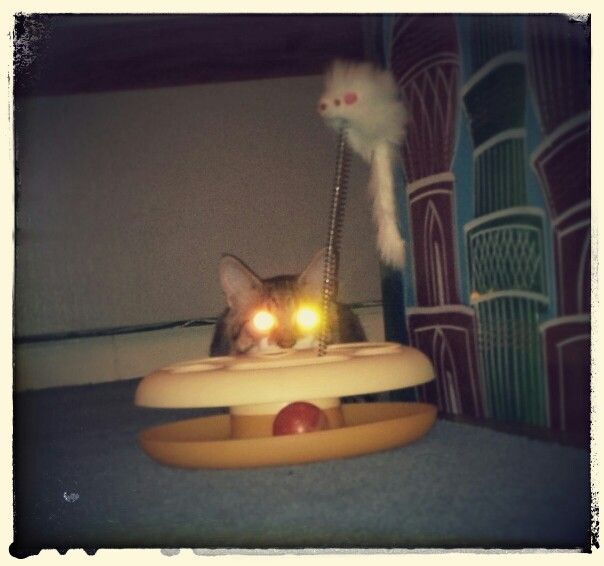 Mackerel tabby cat glowing eyes