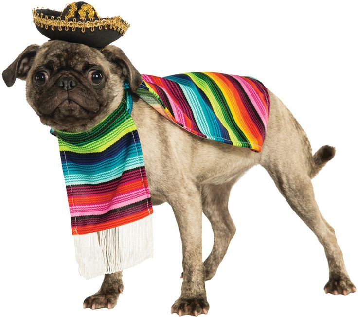 pet costume: mexican poncho sombrero medium