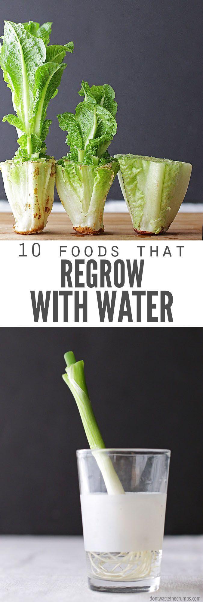Nachwachsen von Lebensmitteln in Wasser: 10 Lebensmittel, die ohne Schmutz nachwachsen