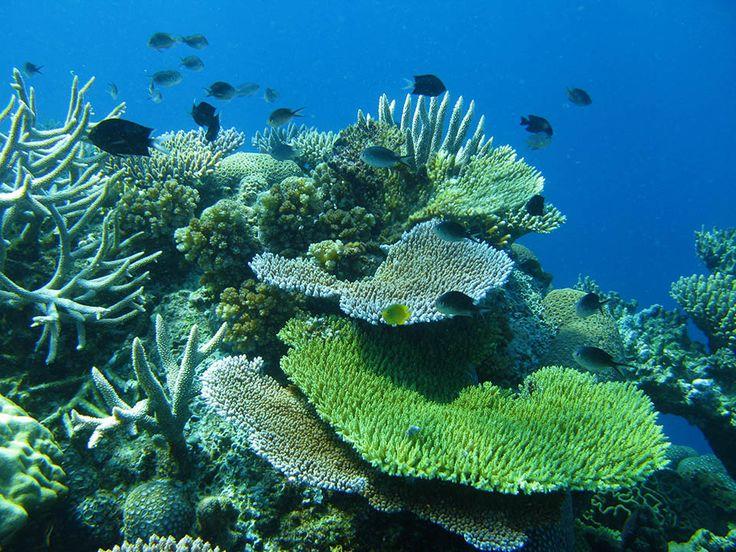 TRUE NORTH Diving & Snorkeling - North Star Cruises Australia