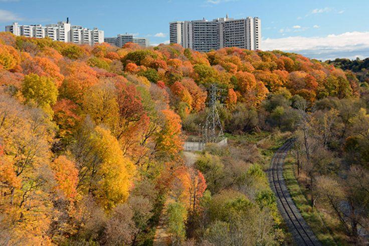 "Toronto, Ontario [SOURCE: ""This Is What a November Heat Wave Looks Like In Toronto"" @ BlogTo] -- #Autumn #Toronto #Ontario #Canada #NorthAmerica #Landscape #City #Autumn"