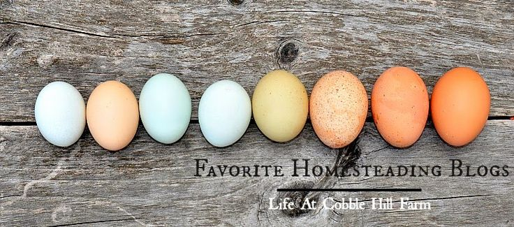 Life At Cobble Hill Farm: A List Of Favorite Homesteading Blogs
