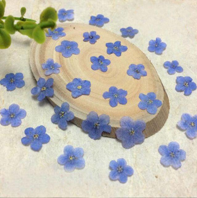 100 sztuk Wciśnięty Suszone Niebieski Myosotis Sylvatica Forgetmenot Kwiat Roślin Herbarium Telefon Case Rama Making Akcesoria Do Biżuterii
