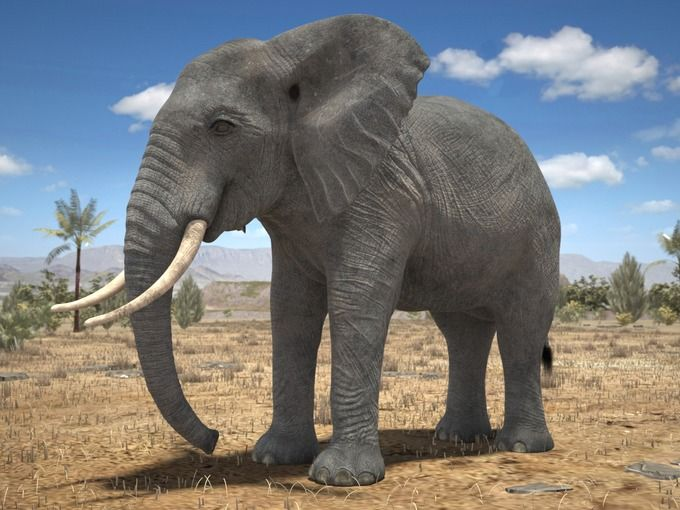 African Elephant Rigged for 3dsmax by SQUIR on @creativemarket