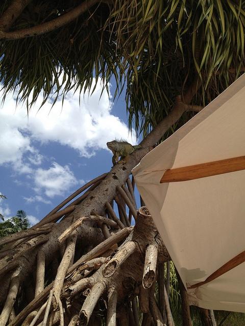 Big Boy Comes To Visit - Playa Conchal