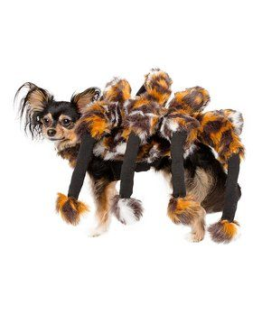 Cat & Small Dog Spider Costume