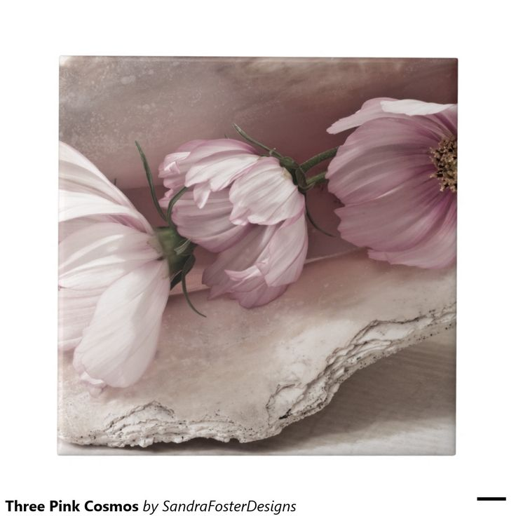 Three Pink Cosmos Ceramic Tiles