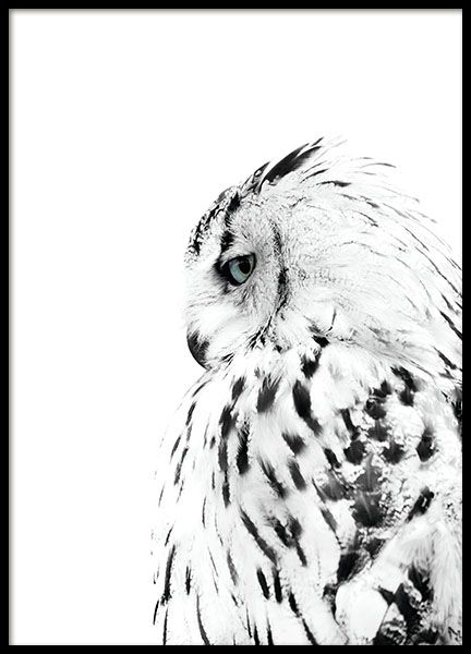 Photo poster with a white owl. A beautiful and light photograph that will look great on any wall. We have stylish photos of animals and more in our categories and inspiration pages. Why not create a nice collage with some of your favorite posters? Perfect for a clean, Scandinavian decorating style. www.desenio.com