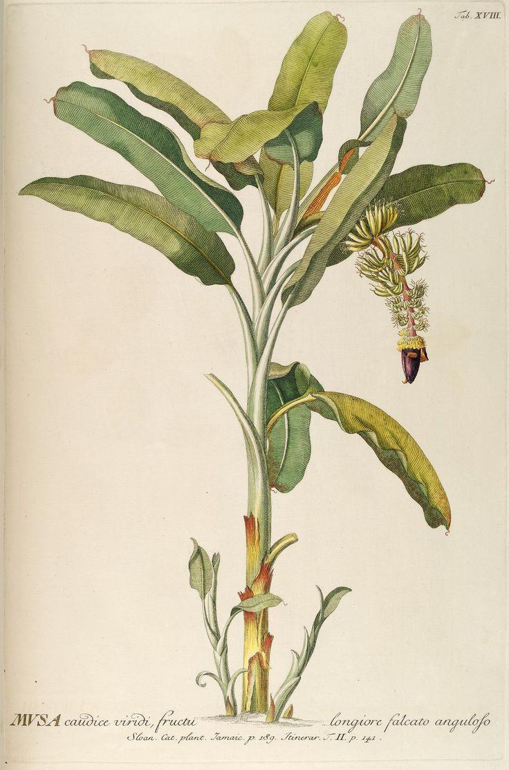 v.1-10 - Plantae selectae quarum imagines ad exemplaria naturalia Londini, in hortis curiosorum nutrita - Biodiversity Heritage Library