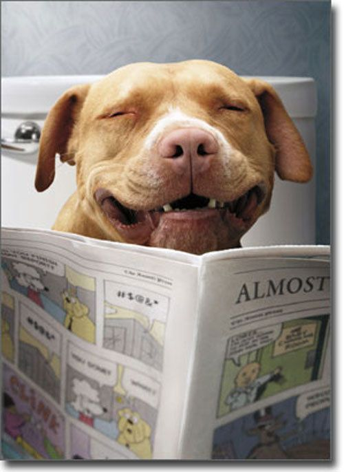 Details About Dog Reading Funnies Funny Birthday Card