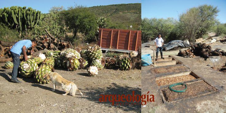 """El mezcal,  """"AGUA DE LAS VERDES MATAS...""""  En México cada clase de mezcal está asociada a una especie de maguey o de otras plantas similares emparentadas, así como a una región geográfica particular, como el sotol en Chihuahua, Durango y Coahuila, el bacanora de Sonora, el mezcal de gusano en Oaxaca, y el mismísimo tequila jalisciense. Mezcal es un vocablo derivado del náhuatl, mexcalli, que significa maguey cocido o pencas cocidas del maguey, lo que alude a una forma en que se prepara el…"""