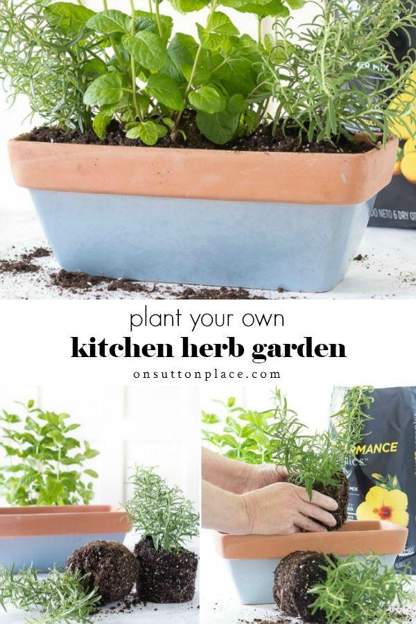 Pin On Best Herb Garden Ideas 400 x 300