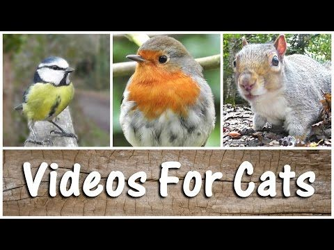 SPECTACULAR Videos For Cats To Watch Birds & Squirrels - The Ultimate Compilation Video - YouTube