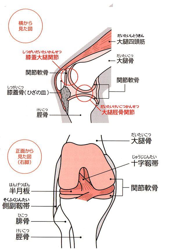 hizakansetsu03.gif (582×860)