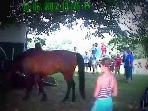 Końska impreza 2012 w Porębie