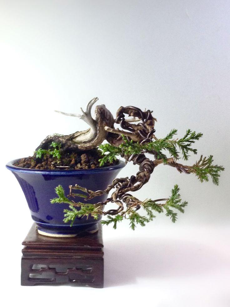 https://m.facebook.com/pre.bonsai/ Itoigawa Shimpaku