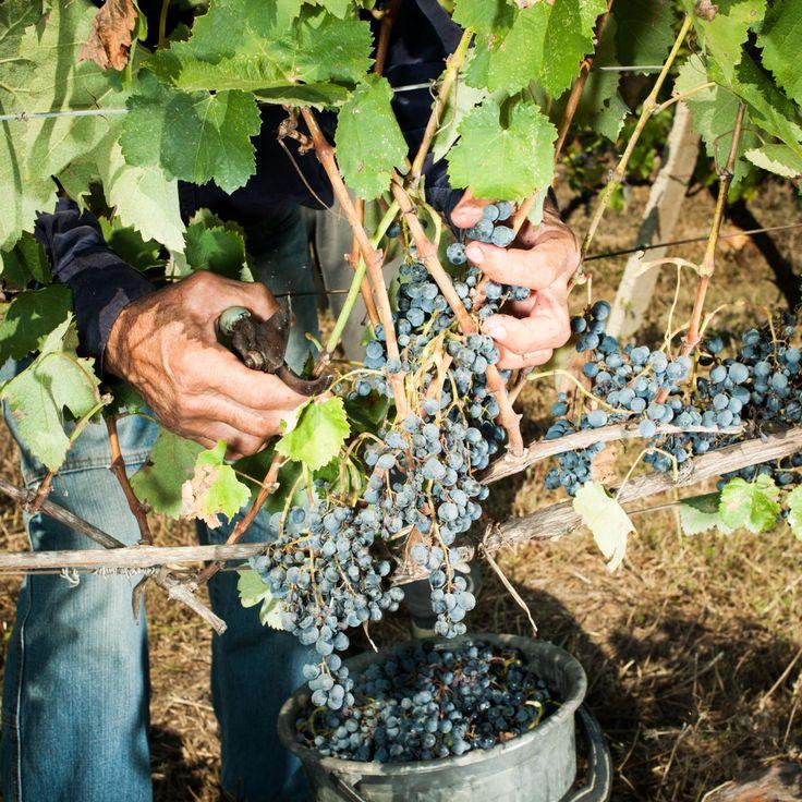 Ältestes Weinbaugebiet bei 8.000 Jahre alter Siedlung entdeckt. #Wein #Weinanbau #Georgien