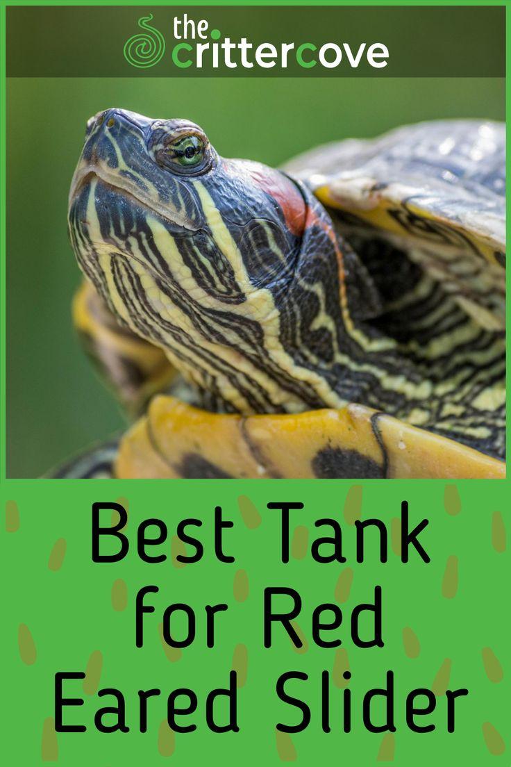 Best Tank for Red Eared Slider in 2020 Red eared slider